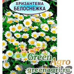 Хризантема Белоснежка максимум Аэлита Ц