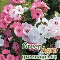 """Лаватера трёхмесячная (Lavatera trimestris) """"Regis"""" (mix) 50 гр."""