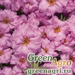 """Портулак крупноцветковый (Portulaca grandiflora) """"Stopwatch F1"""" (rose) raw 1000 шт."""
