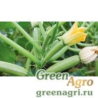 Ангелина F1 0,5тыс. семян, Syngenta