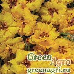"Портулак крупноцветковый (Portulaca grandiflora) ""Stopwatch F1"" (yellow) raw 1000 шт."