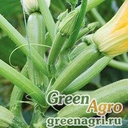Отто F1 0,5тыс. семян, Syngenta