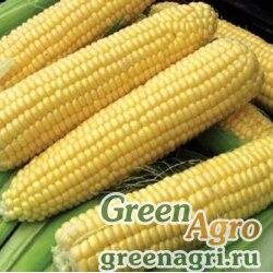 Семена Кукуруза, СИ Ротанго (Форс Зеа), 1 п.е., Syngenta