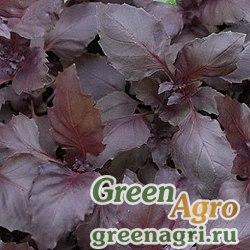 Базилик овощной Пурпурные звезды (упак-50 гр.)