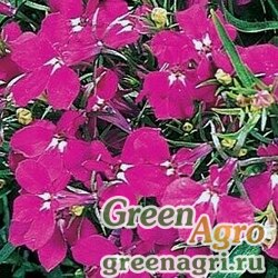 "Лобелия ежевидная (Lobelia erinus) ""Riviera"" (rose) raw 1 гр."
