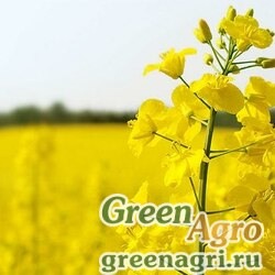 Рапс 1 кг Зеленый уголок (10)