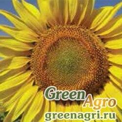 Семена Подсолнечник, ЕС Монолиза, 1 п.е., Bayer