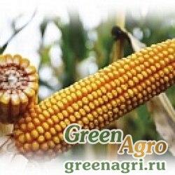 Семена Кукуруза, ЕС Сириус, 1 п.е., Bayer