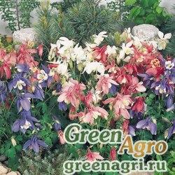 """Аквилегия гибридная (Aquilegia hybrida) """"Spring Magic"""" (mix) raw 1000 шт."""