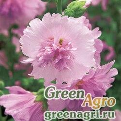 "Мальва (Штокроза) розовая (Alcea rosea annua) ""Spring Celebrities"" (lilac) raw 1000 шт."