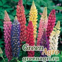 "Люпин многолистный (Lupinus polyphyllus) ""Russell strain"" (mix) 50 гр."