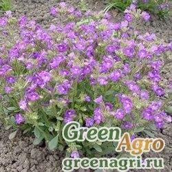 "Льнянка душицелистная (Chaenorhinum origanifolium) ""Arista"" (blue) Raw 1000 шт."