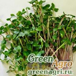 Микрозелень Пикантная смесь мини НК Ц