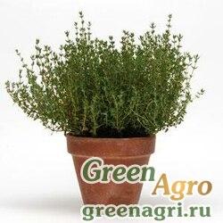 Тимьян обыкновенный Thymus vulgaris THYM GREEN Multi-pelleted 1000