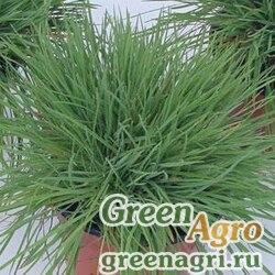 Тонконог Келерия сизый Koeleria glauca COOLIO GREEN Multi-pelleted 1000