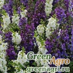 Ангелония узколистная Angelonia angustifolia SERENA MIX WATERFALL Pelleted 100