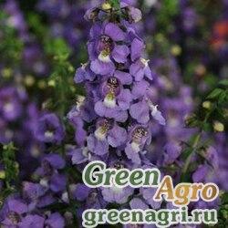 "Ангелония узколистная (Angelonia angustifolia) ""Serena F1"" (white) Pelleted 1000 шт."
