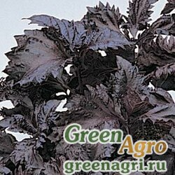"Базилик благородный (Ocimum basilicum) ""SimpleHerbs Basil"" (green) multi-pelleted 1000 шт."