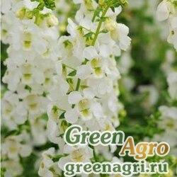 Ангелония узколистная Angelonia angustifolia SERENA WHITE Pelleted 100