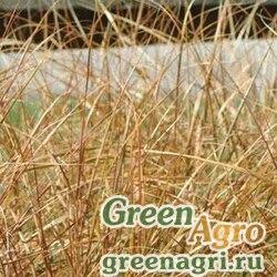 Анемантеле тростниковидный Anemanthele lessoniana SIROCCO YELLOW Multi-pelleted 1000
