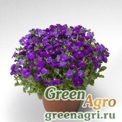 "Аубриета гибридная (Aubrieta hybrida) ""Audrey F1"" (deep blue shades) raw 1000 шт."