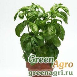 Базилик благородный Ocimum basilicum SIMPLYHERBS BASIL GREEN Multi-pelleted 1000