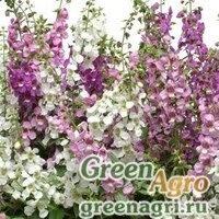 Ангелония узколистная Angelonia angustifolia SERENA MIX Pelleted 100