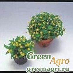 """Меламподиум болотный (Melampodium paludosum) """"Delight"""" (lemon) 1000 шт."""