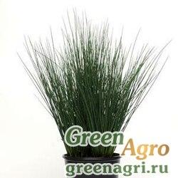 Ситник тонкий Juncus tenuis BLUE DART GREEN Multi-pelleted 1000
