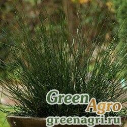 Ситник искривленный/развесистый Juncus inflexus TWISTED DART GREEN Multi-pelleted 100