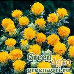 Сафлор красильный Carthamus tinctorius Kinko Yellow Raw 5000