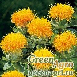Сафлор красильный Carthamus tinctorius Zanzibar Yellow Raw 5000