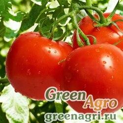 Семена томата Санька 10 гр