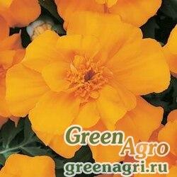 """Бархатцы отклоненные (Tagetes patula) """"Durango"""" (orange) detailed 1000 шт."""