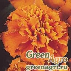 "Бархатцы отклоненные (Tagetes patula) ""Janie"" (deep orange) detailed 1000 шт."