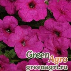 "Петуния ампельная гибридная (Petunia x hybrida) ""Easy Wave F1"" (neon rose) pelleted 100 шт."