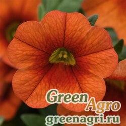 "Калибрахоа гибридная ампельная (Calibrachoa hybrida) ""Kabloom F1"" (orange) multi-pelleted 100 шт."