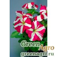 "Петуния крупноцветковая (Petunia grandiflora) ""Tango F1"" (rose star) pelleted 1000 шт."