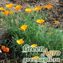 Эсшольция калифорнийская (Eschscholzia californica) 80 гр.
