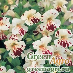 "Губастик гибридный (Mimulus x hybrida) ""Magic F1"" (white blotch) raw 1000 шт."