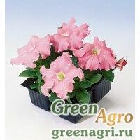 "Петуния крупноцветковая (Petunia grandiflora) ""Tango F1"" (salmon) pelleted 1000 шт."