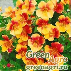 "Губастик гибридный (Mimulus x hybrida) ""Magic F1"" (yellow bicolor) raw 1000 шт."