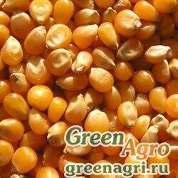 Семена Кукуруза, ЕС Зизу, 1 п.е., Bayer