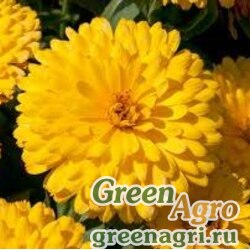 "Календула лекарственная (Calendula officinalis) ""Gitana"" (yellow) 30 гр."