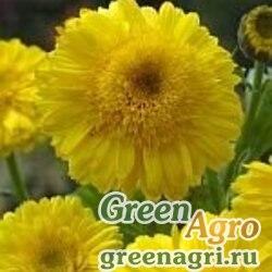 "Календула лекарственная (Calendula officinalis) ""Kablоuna"" (intense yellow) 60 гр."