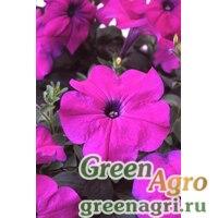 """Петуния многоцветковая (Petunia multiflora) """"Lambada F1"""" (deep violet) pelleted 1000 шт."""