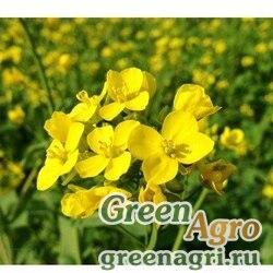 Сидераты Горчица желтая 25 кг Зеленый уголок