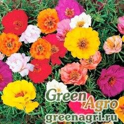 "Портулак крупноцветковый (Portulaca grandiflora) ""Double Flowered"" (mixed) гр 20 гр."