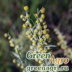 Полынь горькая (Artemisia absinthium) гр 15 гр.