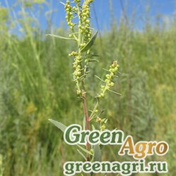 Полынь эстрагон (Artemisia dracunculus) гр 15 гр.